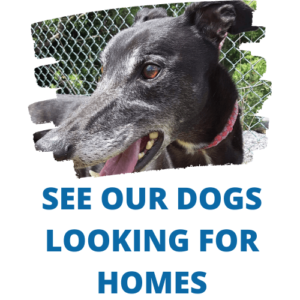Dogs looking for homes